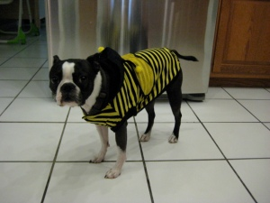 Harry the Bee